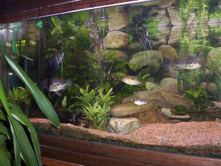 décoration aquarium naturelle